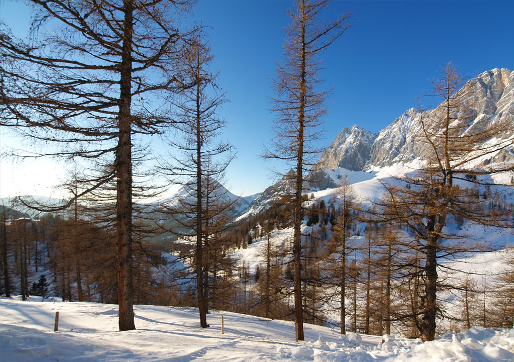 Winterlandschaft in der Ramsau.jpg